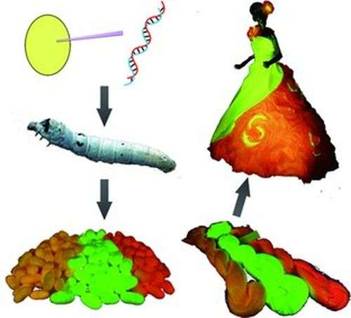 GM silkworms bred to spin fluorescent