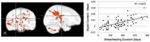 MRI study: Breastfeeding boosts babies' brain growth