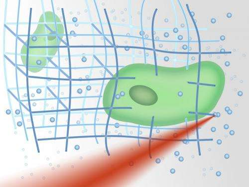 Nanostructures with living cells
