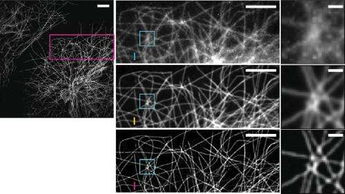 New microscopes at NIH reveal live, developing cells in unprecedented 3-D clarity