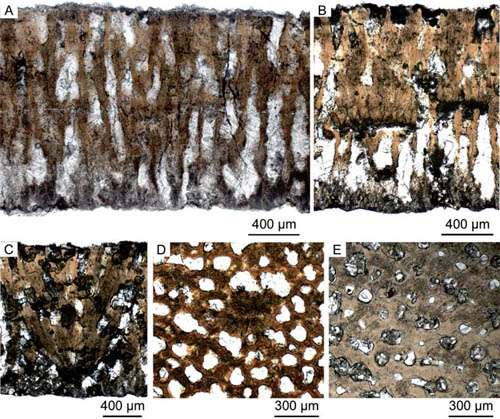 New Parafaveoloolithid dino egg found from the Pingxiang Basin, Jiangxi Province of China