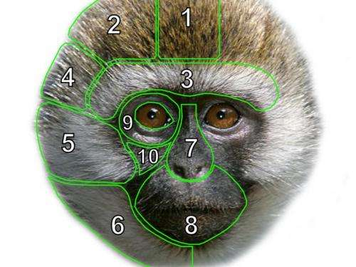 New study on monkeys faces related to environment and social factors