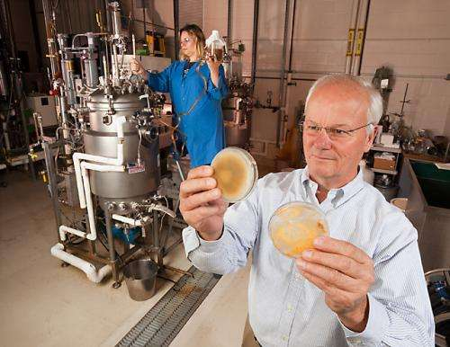 New technology for harvesting the power of beneficial fungi