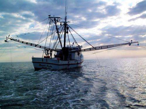 NOAA: 2012 US seafood landings remain near high 2011 levels