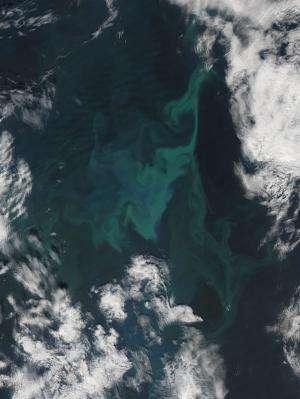 Phytoplankton Bloom in the Norwegian Sea