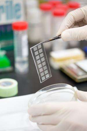 Single-cell genome sequencing gets better
