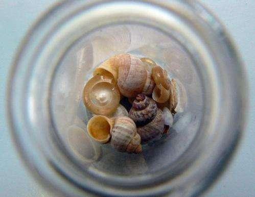 Snails signal a humid Mediterranean