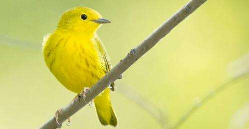 Study documents effects of road noises on migratory birds