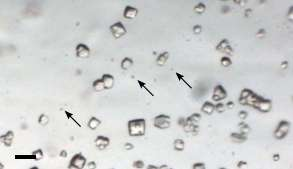 Tiny crystals could revolutionize structural biology studies