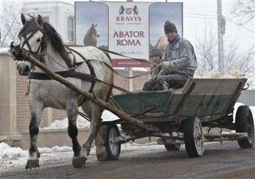 UK food agency raids abattoir in horsemeat scandal