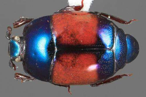 Unearthed: A treasure trove of jewel-like beetles