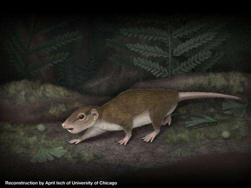 Unearthed: Fossil of history's most successful mammal