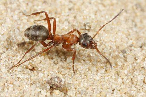 Unique information on Belgian ants compiled and published through FORMIDABEL data paper