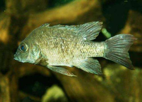 Worldwide appeal finds last remaining Madagascan fish