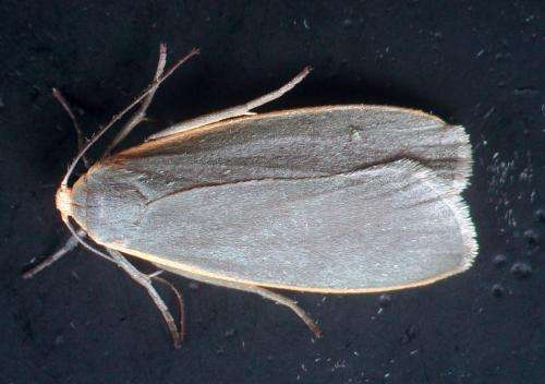 Researchers uncover that moths talk about sex in many ways