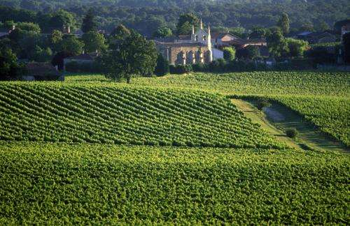 Climate changes will produce wine winners and losers