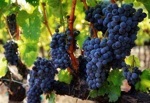 Click, swirl, sip? Interest in online wine surges