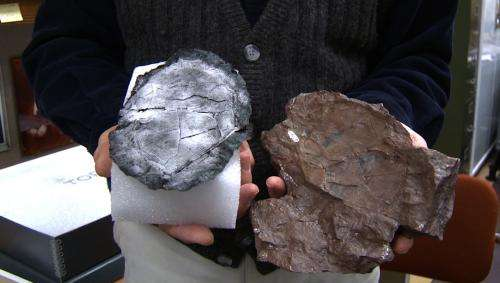 Dusting for prints from a fossil fish to understand evolutionary change