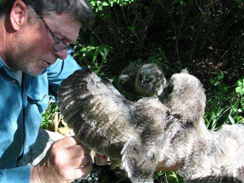 Infrared camera in wild aimed at US owl nest
