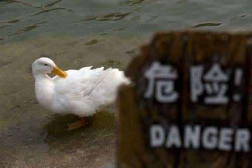 Scientists: China bird virus likely silent threat