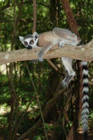 CU-Boulder-led team finds first evidence of primates regularly sleeping in caves