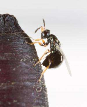 Finding 'Mr. Right,' how insects sniff out the perfect mate