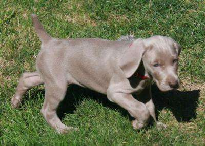 Gene mutation in dogs offers clues for neural tube defects in humans