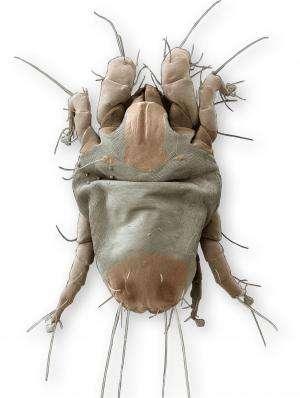 Genetic study of house dust mites demonstrates reversible evolution