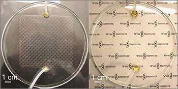 Lifelike cooling for sunbaked windows: Adaptable microfluidic circulatory system could cut air-conditioning costs