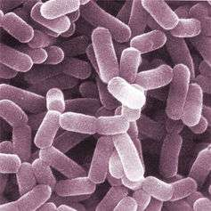 Navel gazing: healthy gut bacteria can help you stress less