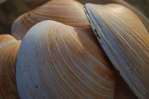 New research reveals Ming the Mollusk actually 100 years older than thought