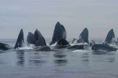 New study identifies 5 distinct humpback whale populations in North Pacific