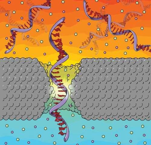 Penn research makes advance in nanotech gene sequencing technique