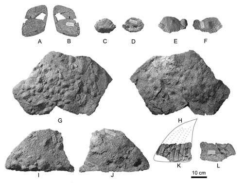Polacanthine ankylosaur dinosaur first discovered in Asia