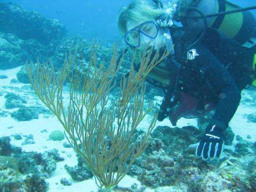 Scent of a coral: Symbiosis between two new barnacle species and a gorgonian host