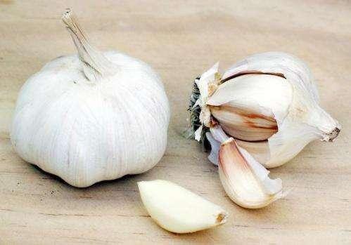 Study indicates oral garlic not useful in treating vaginal thrush
