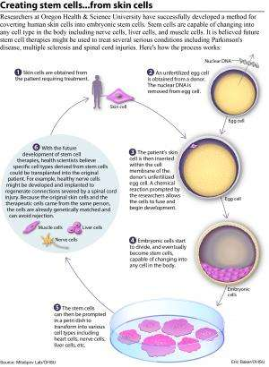 Researchers successfully convert human skin cells into embryonic stem cells