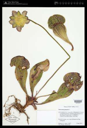 2 million and counting: NYBG digitization project reaches major milestone
