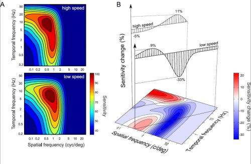 The visual system as economist: Neural resource allocation in visual adaptation