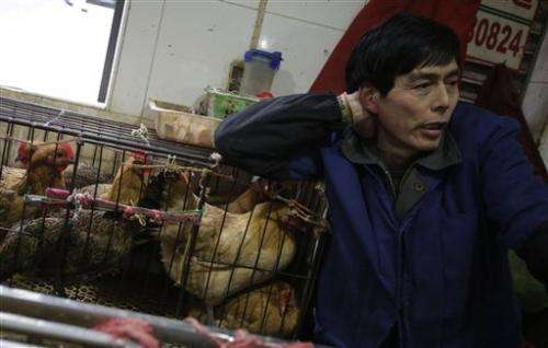 China kills market birds as flu found in pigeons