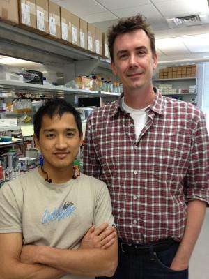 Researchers divide enzyme to conquer genetic puzzle