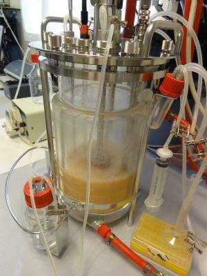 Researchers produce Omega 3 using marine plant micro-organisms