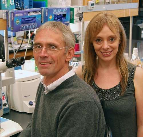 Scripps Research Institute scientists find key signal that guides brain development