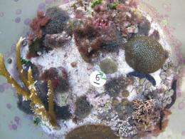 Study finds coral reefs under even greater threat