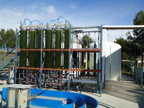Researchers design photobioreactor to produce biofuel from algae