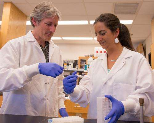 Researchers develop a faster method to identify Salmonella strains