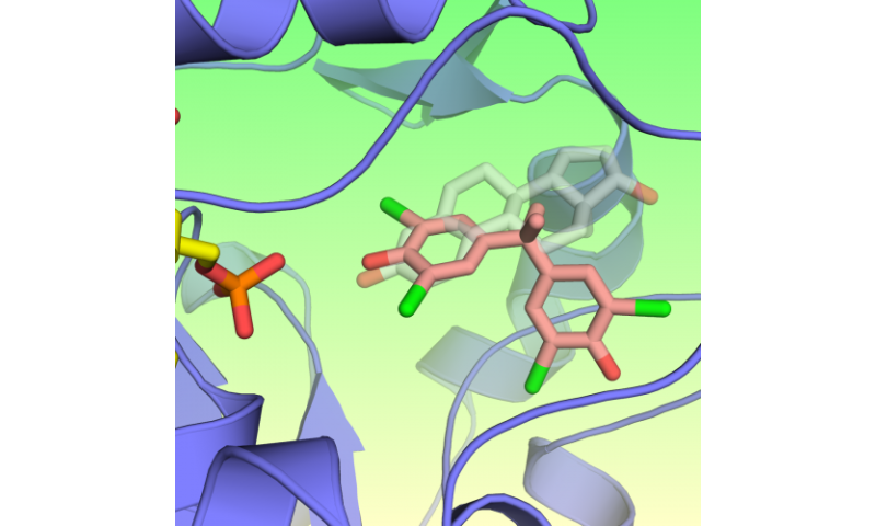 3-D images show flame retardants can mimic estrogens in NIH study