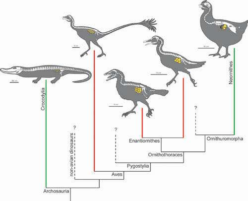 First discovery of fossilized ovaries reveals early evolution of avian reproduction
