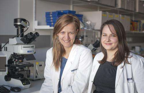 Research reveals cancer-suppressing protein 'multitasks'