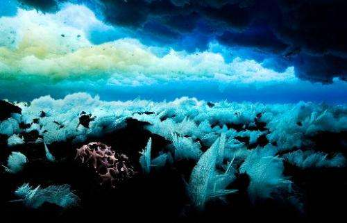 A photo released on November 1, 2011 by the Antarctic Ocean Alliance shows the sea floor in Antarctic waters